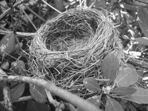 nest bw
