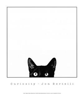 curiosity-cat